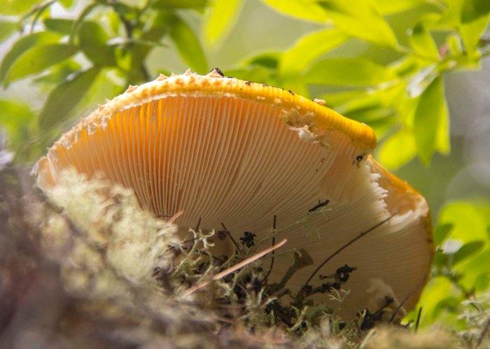 0619 Mushroom (1 of 1)