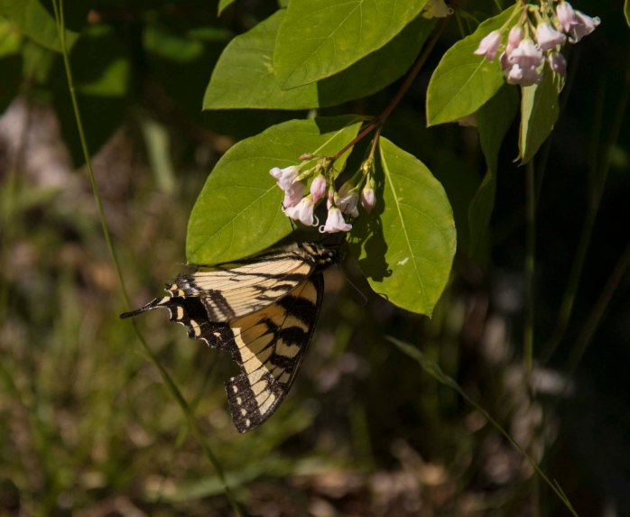 0710 Butterfly (1 of 1)