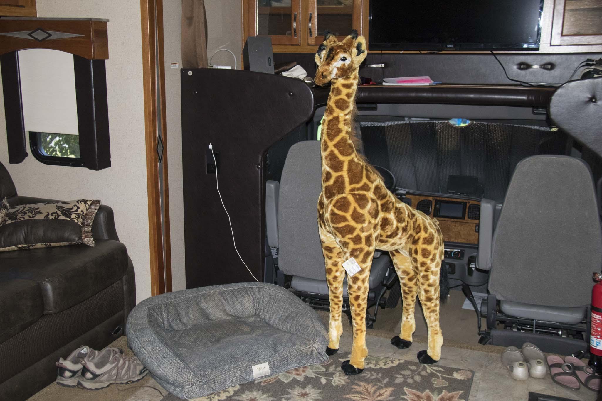 0730 New Giraffe (1 of 1)