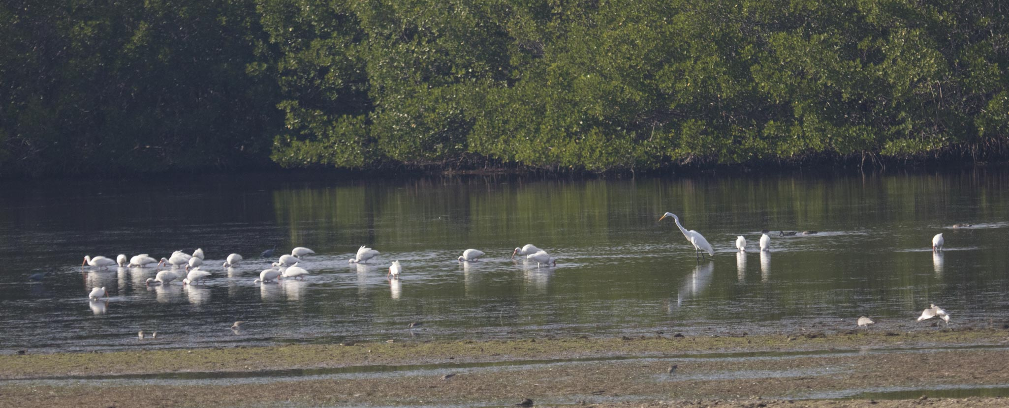 1128 Flock (1 of 1)