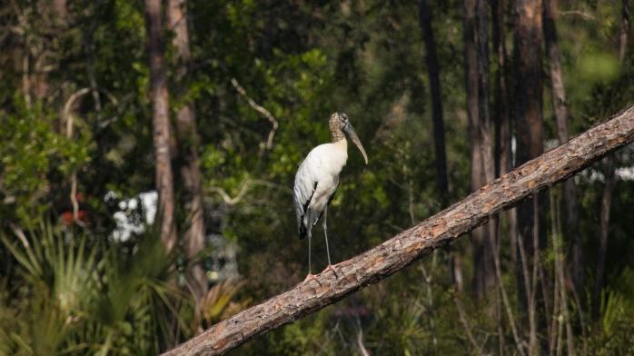 1128B Wood Storck (1 of 1)