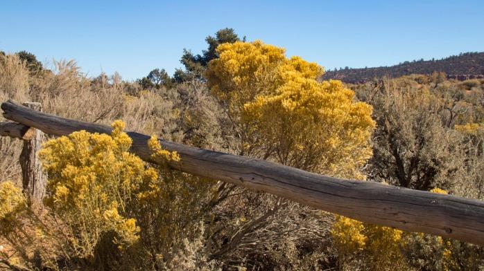 Utah Flora (1 of 1)