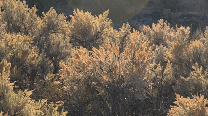 Utah Flora 2 (1 of 1)