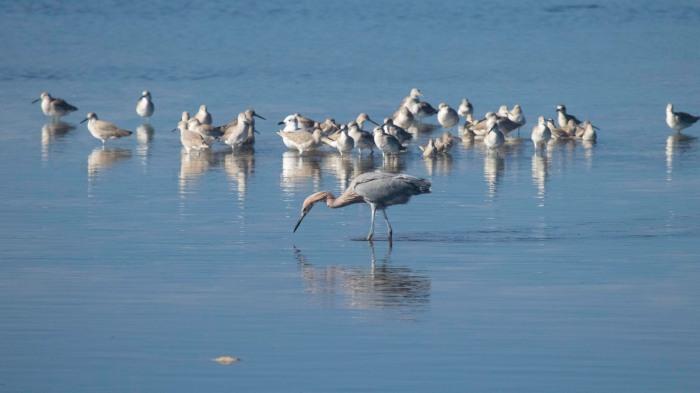 1129 Egret (1 of 1)