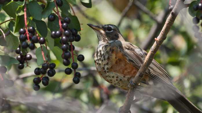 Bird Sanctuary at Estes Park – Linda and Regis travel…