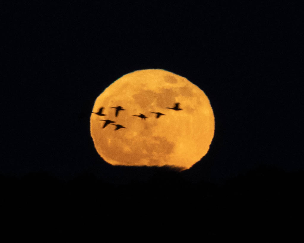 Moonrise over Blackwater Wildlife Refuge